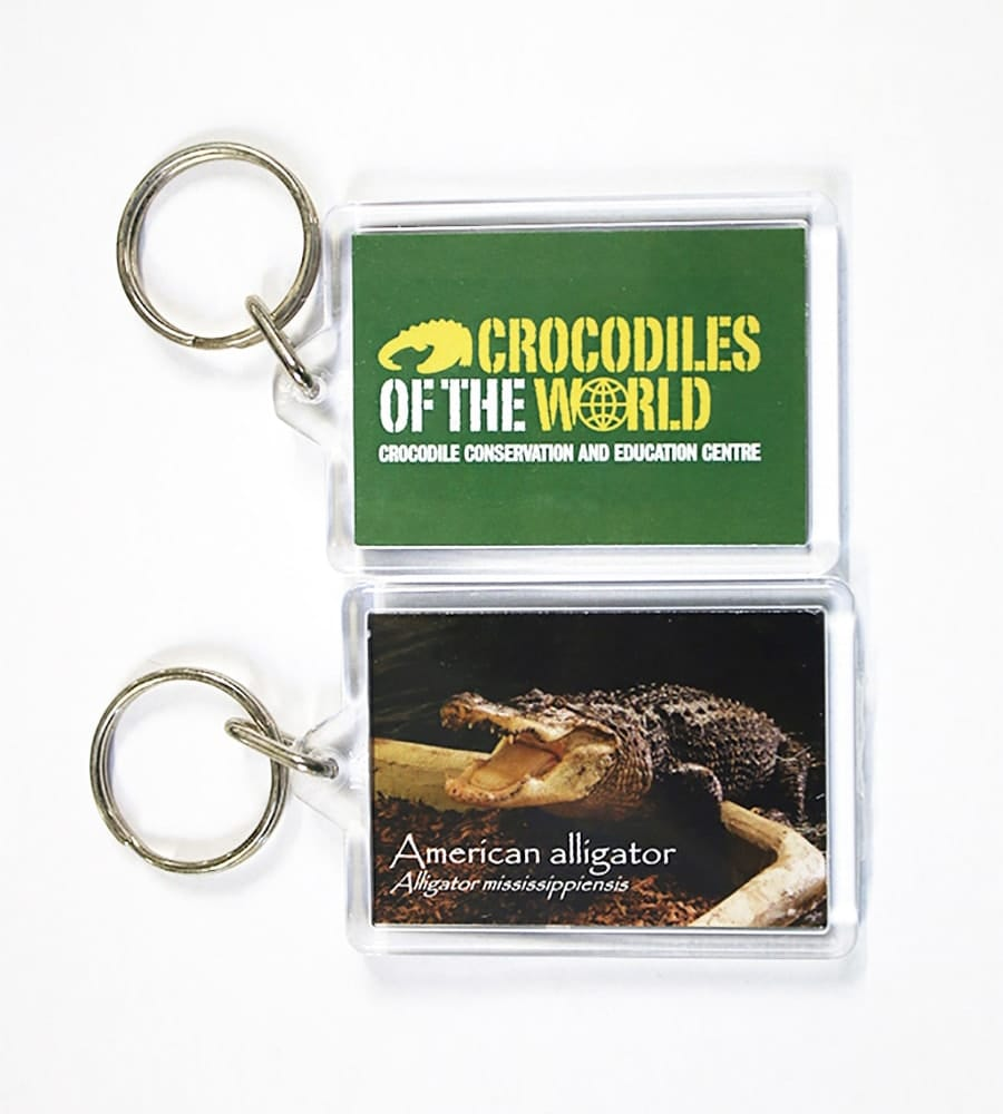 American Alligator Albert Keyring