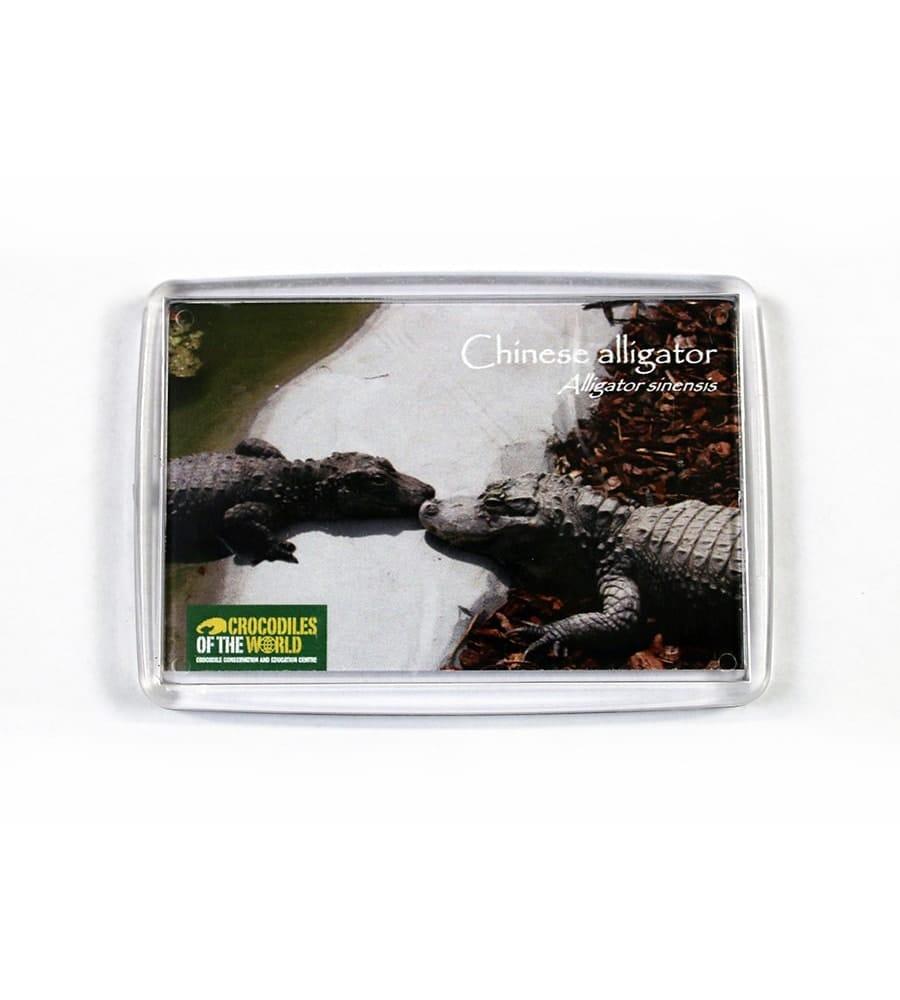 Chinese Alligator Magnet