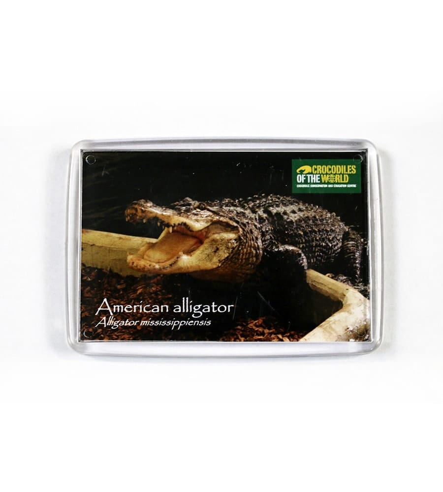 American Alligator Albert Magnet