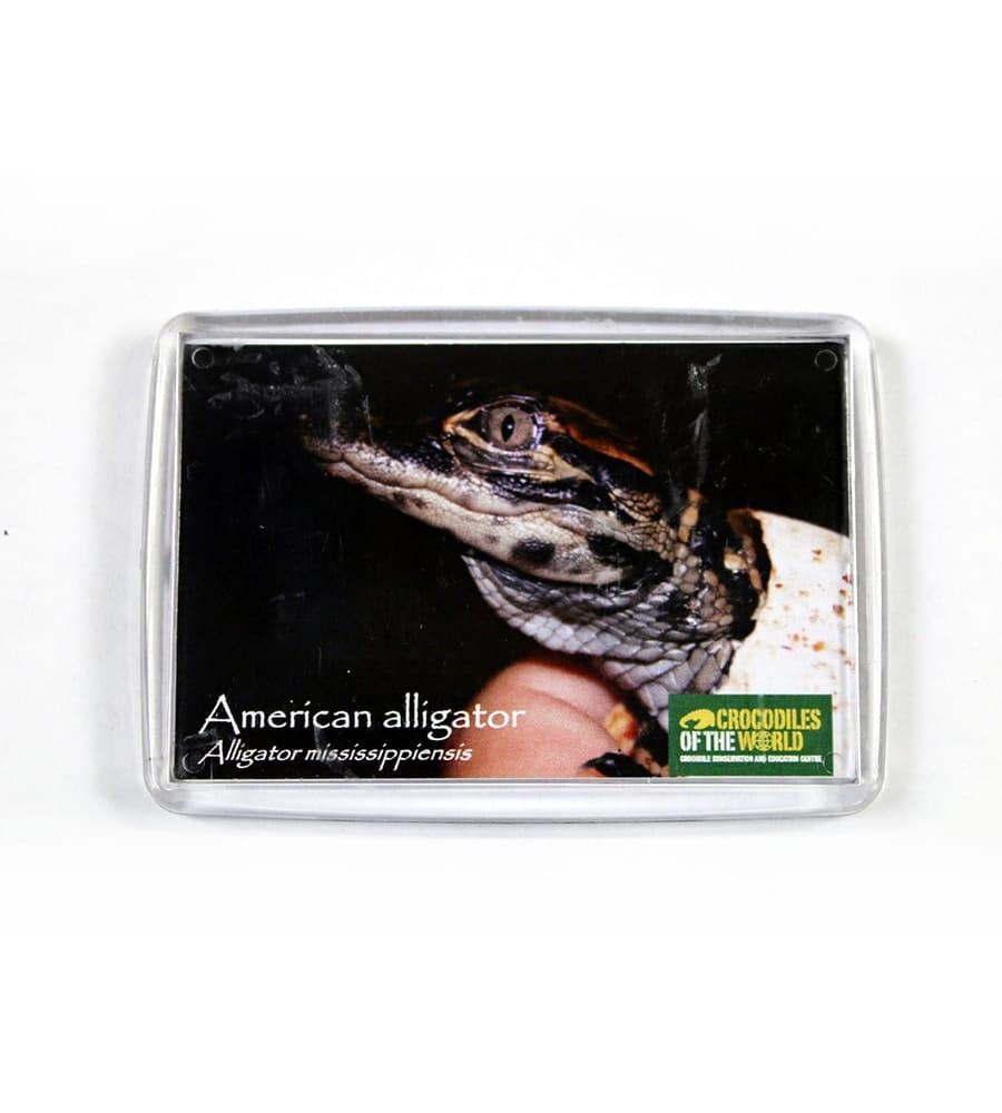 American Alligator Hatchling Magnet