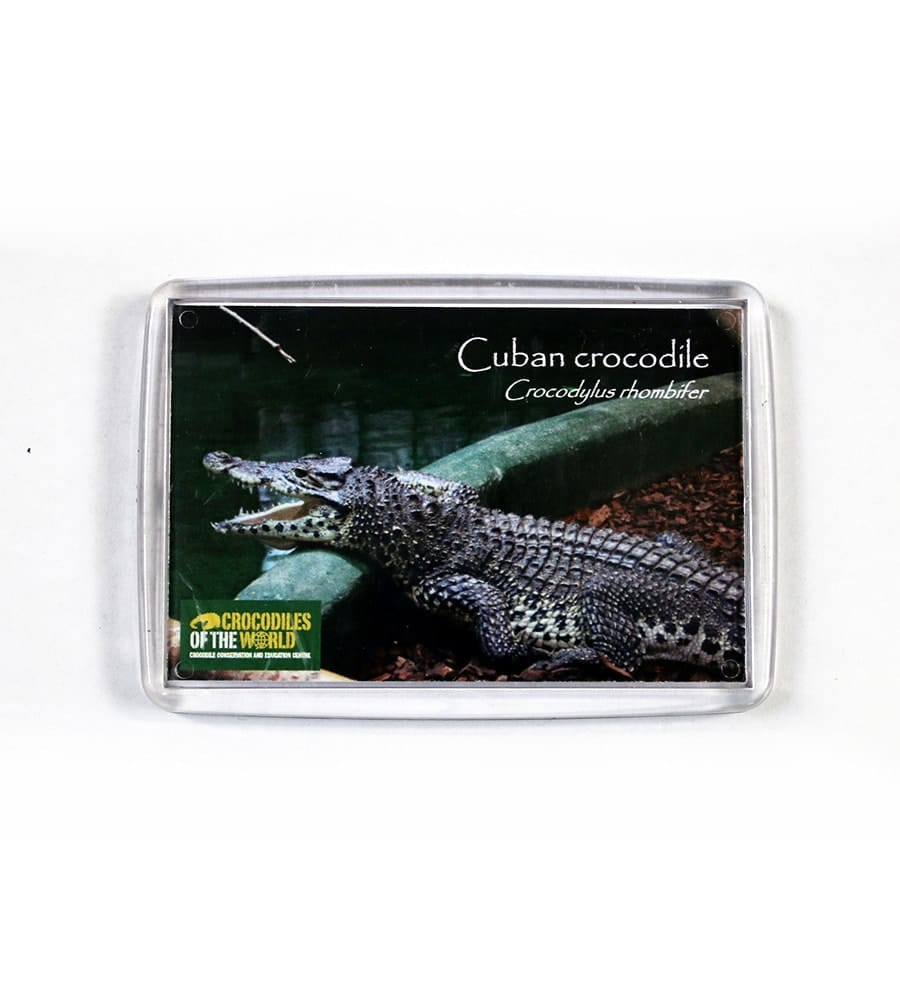 Cuban Crocodile Magnet