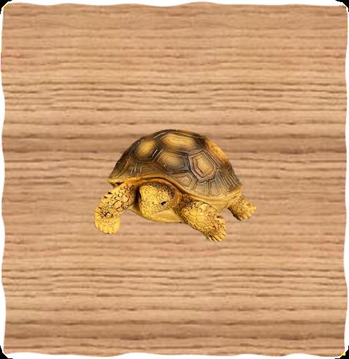 Tortoise Resin Magnet